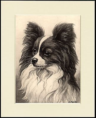 £7.99 • Buy Papillon Charming Little Dog Head Study Print Mounted Ready To Frame