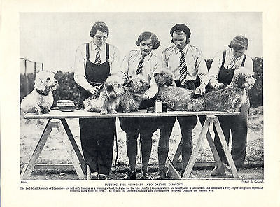 Dandie Dinmont Terrier Kennel Girls Grooming Dogs Old Print Page From 1934 • 6.50£