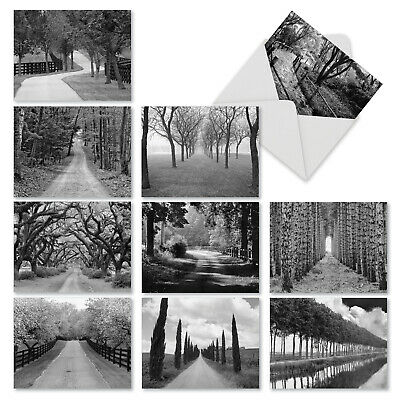 $9.98 • Buy M3313 Tree Lines: 10 Assorted Blank Note Cards W/Envelopes Greeting Card