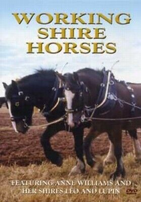 Working Shire Horses DVD (2004) Anne Williams Cert E FREE Shipping, Save £s • 3.78£