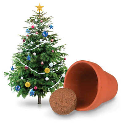 Grow Your Own Christmas Tree Kit  - Gardening Gift - Plant - New  • 6.99£