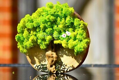 Green Reindeer Moss Tree (Freestanding) Picture | Natural Table Centrepiece • 29.99£