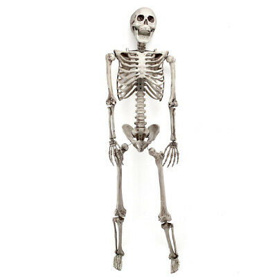 $45.58 • Buy 170cm Halloween Skeleton Full Life Size Human Skull Party Tricky Haunted Props
