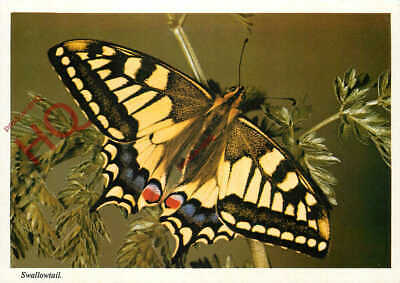 Picture Postcard::Butterfly, Swallowtail • 2.69£