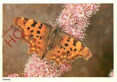 Picture Postcard__Comma Butterfly • 1.99£