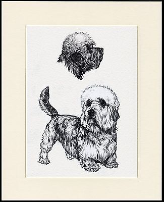 Dandie Dinmont Terrier Lovely Dog Sketch Print Mounted Ready To Frame • 7.99£