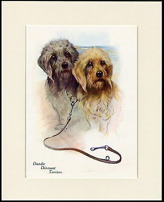 Dandie Dinmont Terrier Two Dogs Lovely Dog Print Mounted Ready To Frame • 7.99£