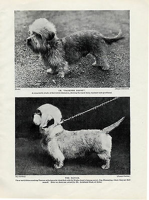 Dandie Dinmont Terrier Named Two Named Dogs Old Original Print Page From 1934 • 6.49£