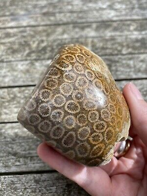 Large Fossilised Coral Specimen AAA+ 196g • 26.99£
