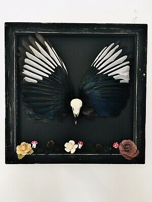 Magpie Wings/ Skull/ Oddities/ Animal Collection/ Halloween/ Creepy/ Gothic • 65£