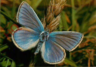 Picture Postcard:;Butterfly, Common Blue • 3.49£