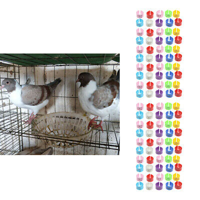 £4.99 • Buy Poultry Colorful Leg Bands Bird Pigeon Parrot Canary Chicks Rings (100Pcs)