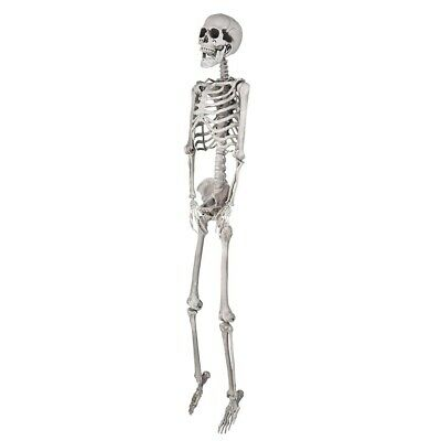 $ CDN57.08 • Buy 5 FT Decoration Full Body Skeleton Props Movable Joints Haunted House Halloween