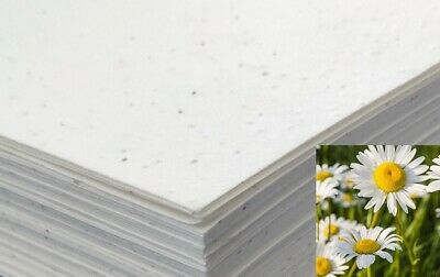£10.99 • Buy Seeded Craft Paper 10 Sheets A4 Size Daisy Seeds 200GSM Cardmaking Plantable ECO