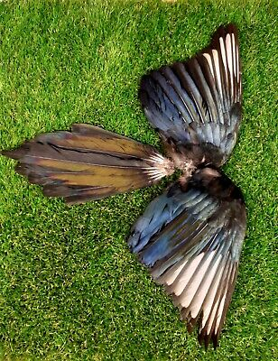 $17.47 • Buy Pair Of Magpie Wings & Tail Feathers (Pica Pica) Art & Craft