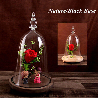 £16.43 • Buy Glass Display Bell Jar Dome Cloche Xmas Gift Desk Decor Vintage With Wooden Base