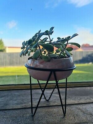 AU22 • Buy Pink Marbled Ceramic Bowl With Black Iron Stand