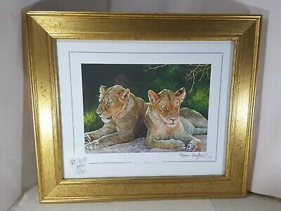 £20 • Buy Lazy Afternoon Stephen Gayford Print Lion Gold Frame Special Edition Remarque