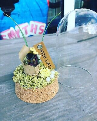 £16 • Buy Bumble Bee Dome/ Oddities/ Curiosities/ Nature/ Cute/ Insect/ Taxidermy