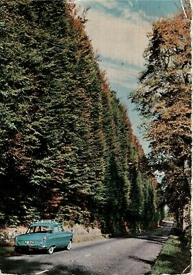 £0.85 • Buy Vintage Postcard The Beech Hedges Near Meikleour Perthshire Posted 1960