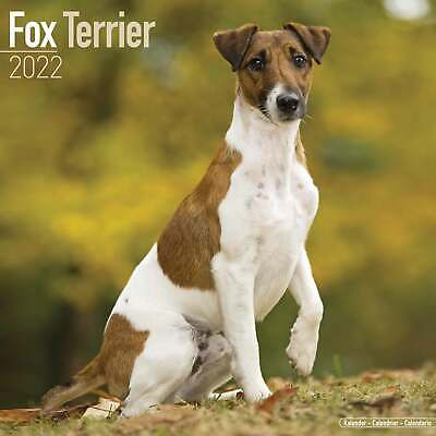 £12.98 • Buy Fox Terrier Calendar 2022 - Dogs - Month To View