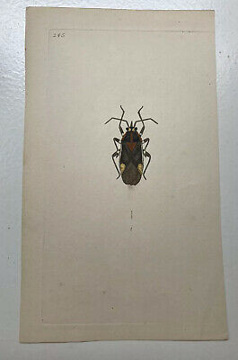 £25 • Buy Late 18th Century Early 19th Century Hand Coloured Engraving Beetle Donovan