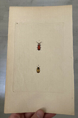£25 • Buy Late 18th Early 19th Century Hand Coloured Engraving Beetles Edward Donovan