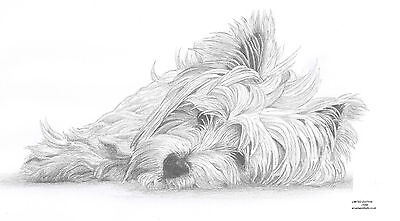 £9.99 • Buy WEST HIGHLAND WHITE TERRIER Dog Art Drawing Prints A4/A3 & Note Greetings Card