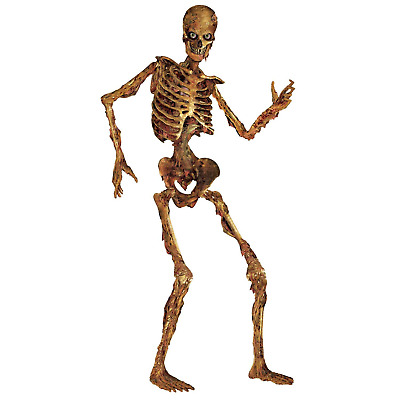 $35.24 • Buy 6 Ft Life Size Jointed Skeleton Halloween Party Haunted House Decoration Props