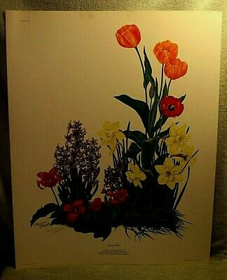 $ CDN33.46 • Buy Signed  Spring Bulbs  Lithograph By Maryrose Wampler With COA