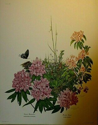 $ CDN33.46 • Buy Signed  Rhododendron  Lithograph By Maryrose Wampler With COA