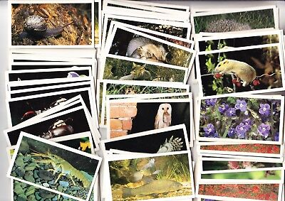 124 GRANDEE CARDS (Nocturnal Wildlife, Wild Flowers) • 1.50£