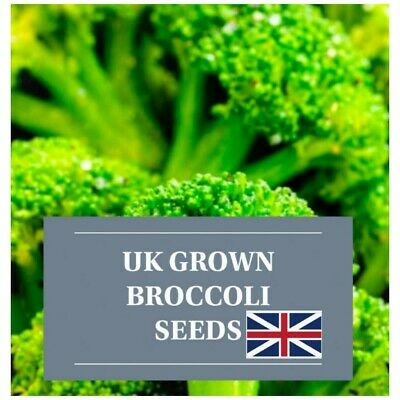 £4.30 • Buy 300 UK Organic Broccoli Seeds For Sprouting