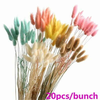 20PC Rabbit Tail Grass Bunny Tails Dried Flowers Lagurus Ovatus Plant Stems A+ • 5.55£