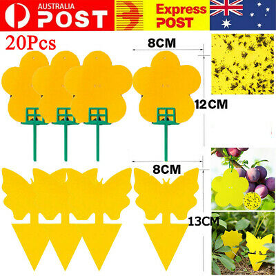 AU12.99 • Buy 20Pcs Dual Sided Sticky Trap Insect Killer Whitefly Thrip Fruit Fly Gnat Catche