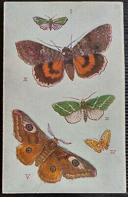 Butterflies On The Wing Tucks Oilette Postcard  • 1.60£