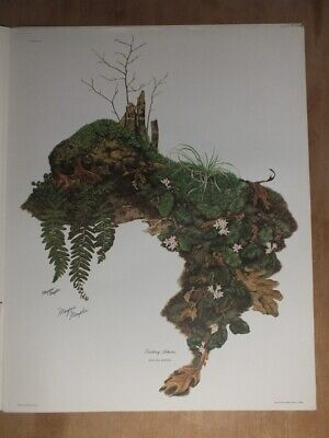 $ CDN48.99 • Buy Signed Lithograph By Maryrose Wampler  - Trailing Arbutus  Epigaea Repens