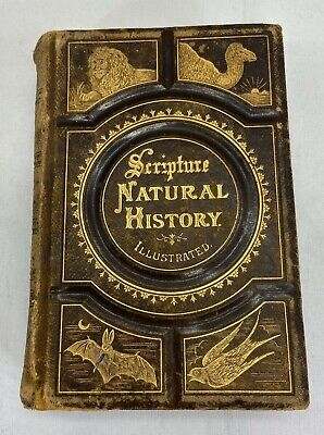 £70.80 • Buy 1877 Wood's Bible Animals Scripture Natural History Illustrated By J.G. Wood