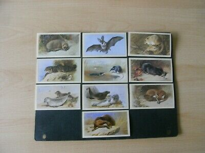 Full Set X 30 Grandee Cigar Cards  British Mammals  1984 • 0.49£