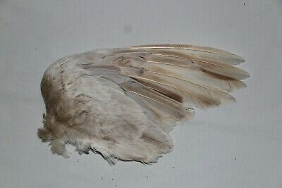 £7.99 • Buy Vintage Bird Wing Feathers