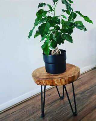 £40 • Buy Handmade Side/accent Table. Made From Tree Trunk. Full Customization Available!
