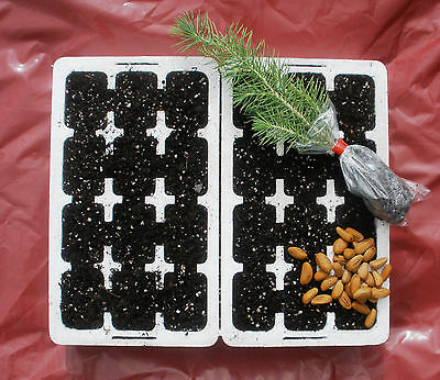 £9.99 • Buy Grow Your Own Tree - Professional Propagation And Growing  Kit.