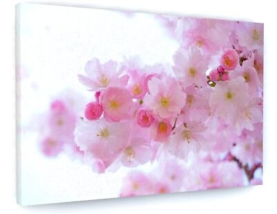£23.51 • Buy Stunning Pink Cherry Tree Blossom Canvas Picture Prints 1947