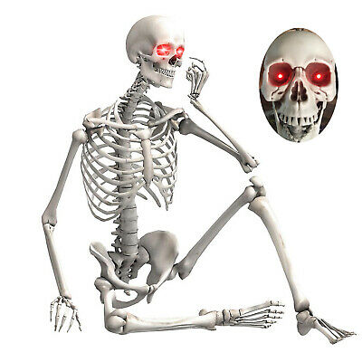 $47.98 • Buy 5.6FT Halloween Life Size Skeleton Human Body Poseable Props Party House Decor