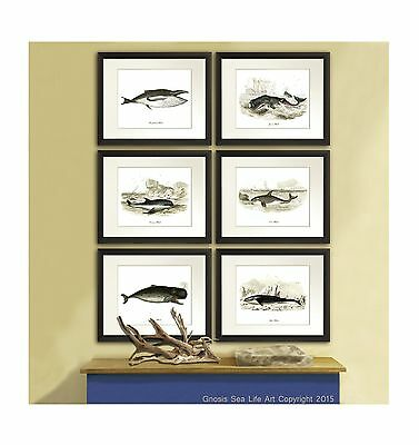 Antique Whale Art Prints Set Of 6 Nautical Boy Bedroom Decor Wall Hanging Wall • 33.97£