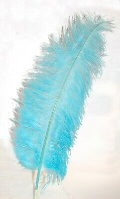 $14.99 • Buy 3 AQUA BLUE Ostrich SPADS 20-30  Full Wing Feather PLUMES; Craft/Centerpiece
