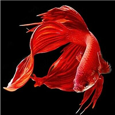$ CDN12.69 • Buy 5D Red Fish Diamond Painting Full Drill Embroidery Crafts Kits Wall Decor Gifts