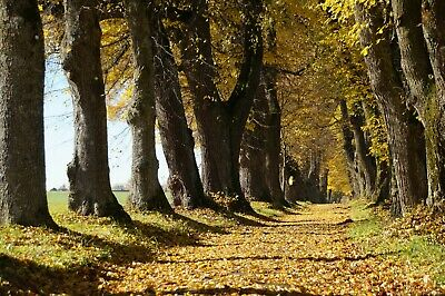 Woodland Forest Path Trees Landscape Canvas Picture Poster Print Unframed 6291 • 15.88£