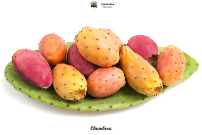 Prickly Pear - Opuntia Ficus Indica - 100 Seeds  • 1.27£