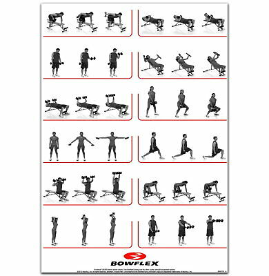 59149 Dumbbell Workout HQ Gym Fitness Exercises Wall Print POSTER UK • 13.95£